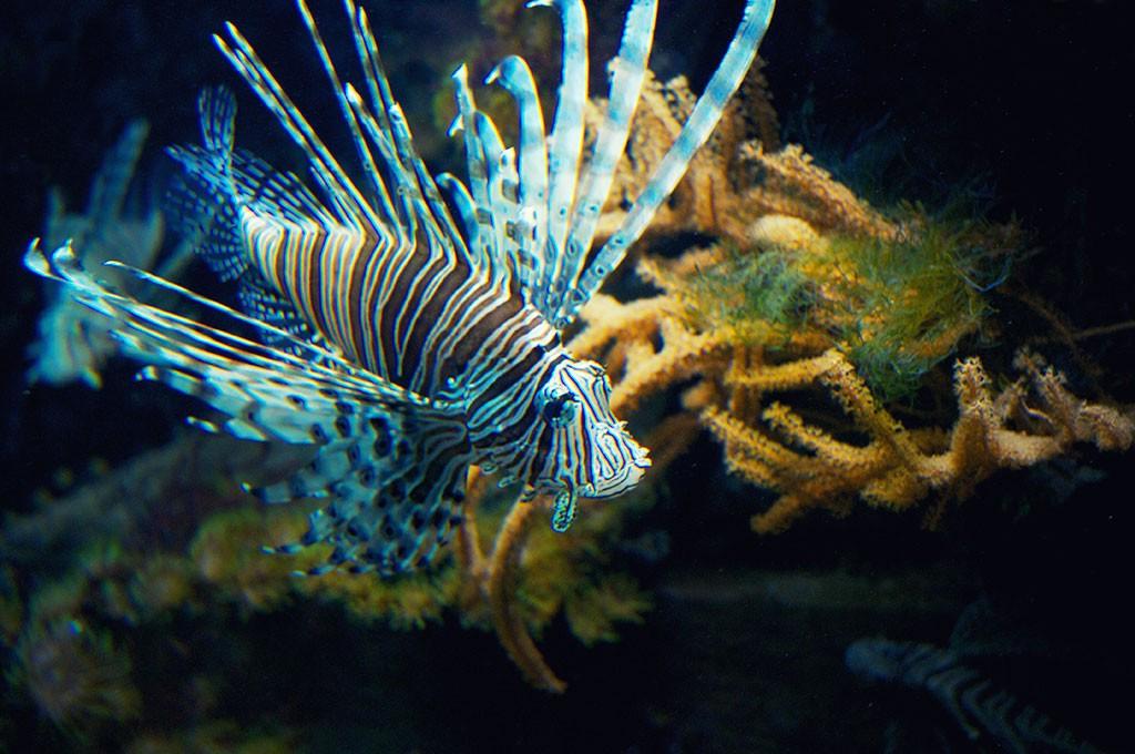 Nausicaa l 39 aquarium g ant de boulogne sur mer - Grand poisson de mer ...