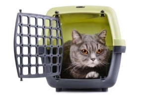 chat-voyage-cage-transport