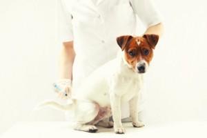veterinaire-chien-vaccin
