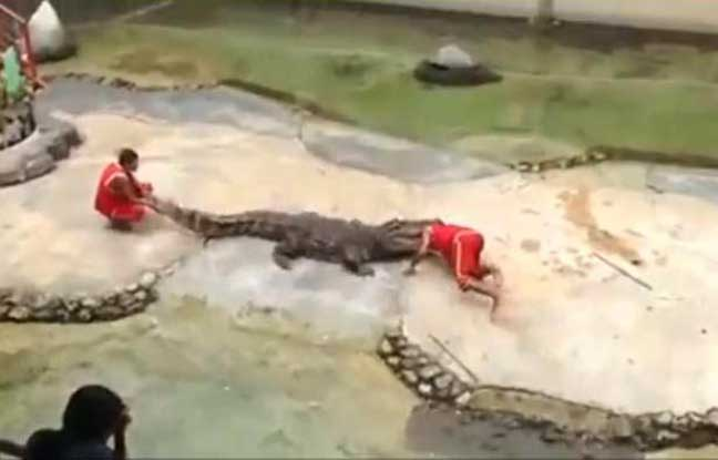 Accident ferme crocodile thailande