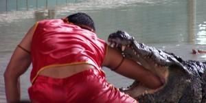 un bras dans la gueule d'un crocodile à Pattaya