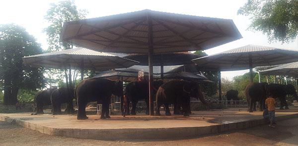 Parc d'éléphants au zoo de Pattaya