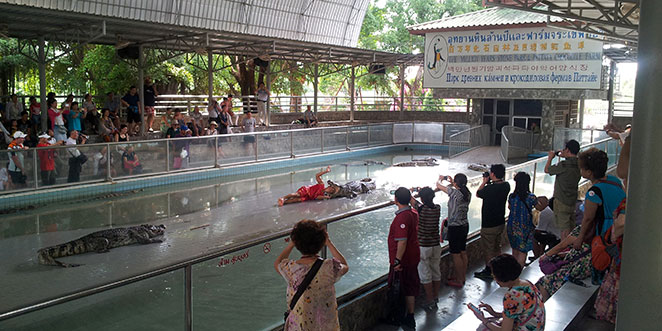 Spectacle de crocodiles à Pattaya