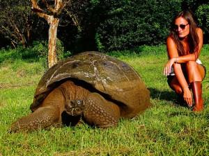 jeanne est près d'une tortue géante en équateur, pays d'amerique latine