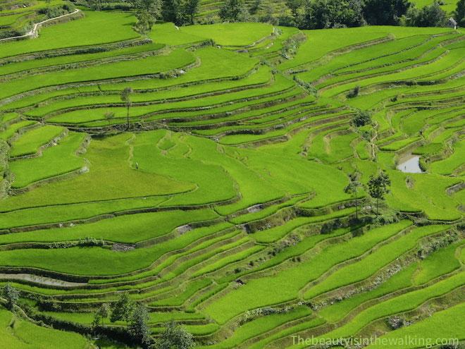 Rizières Yuanyang Yunnan