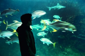 boulogne-sur-mer-nausicaa-aquarium-jerome-2