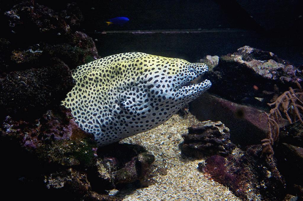 boulogne-sur-mer-nausicaa-aquarium-murene-leopard