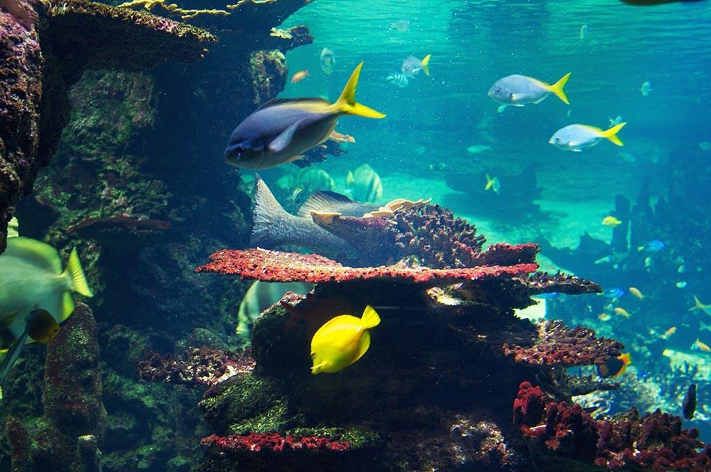 boulogne-sur-mer-nausicaa-aquarium-poissons-2