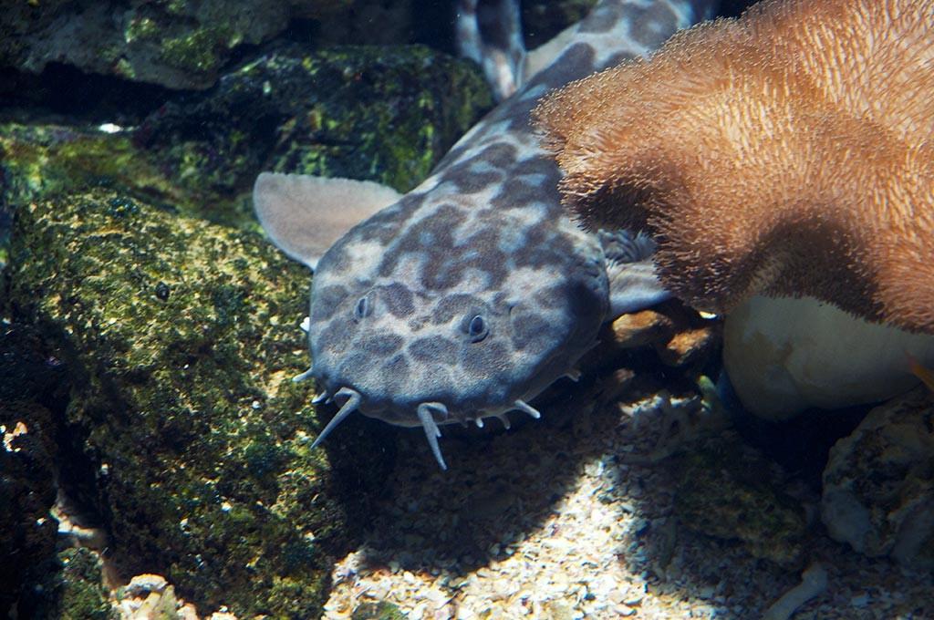 boulogne-sur-mer-nausicaa-aquarium-requin-tapis-2