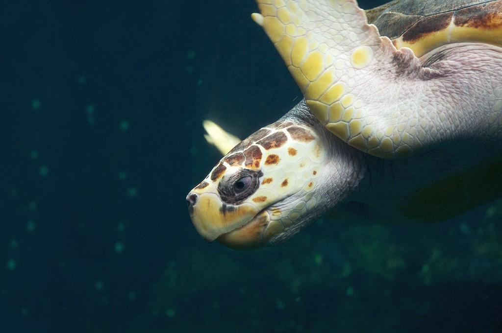 boulogne-sur-mer-nausicaa-aquarium-tortue-1