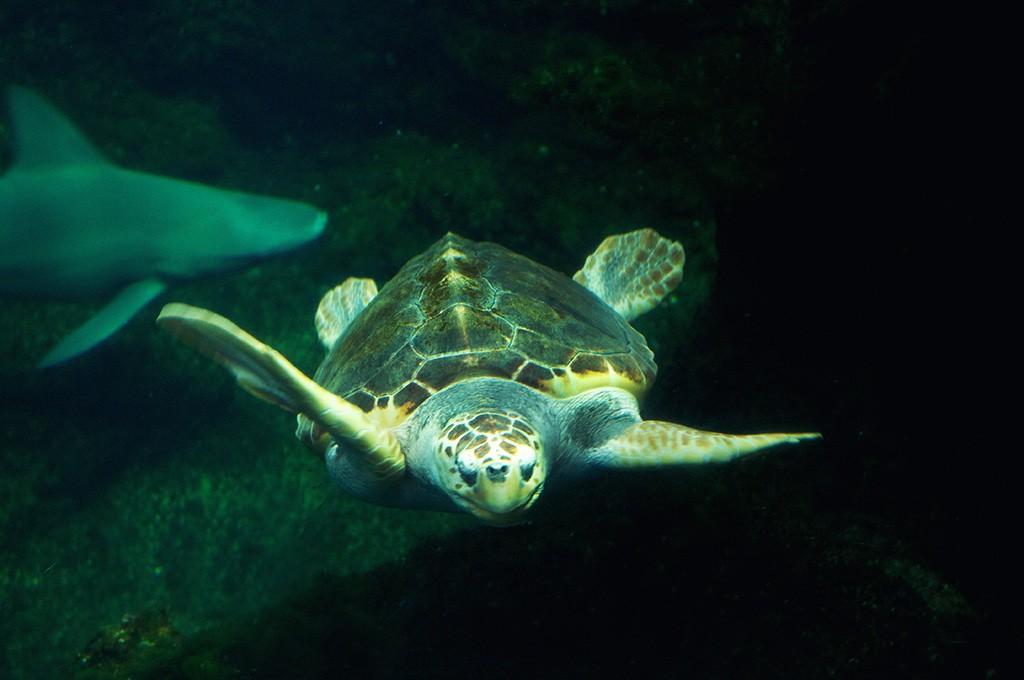 boulogne-sur-mer-nausicaa-aquarium-tortue-2
