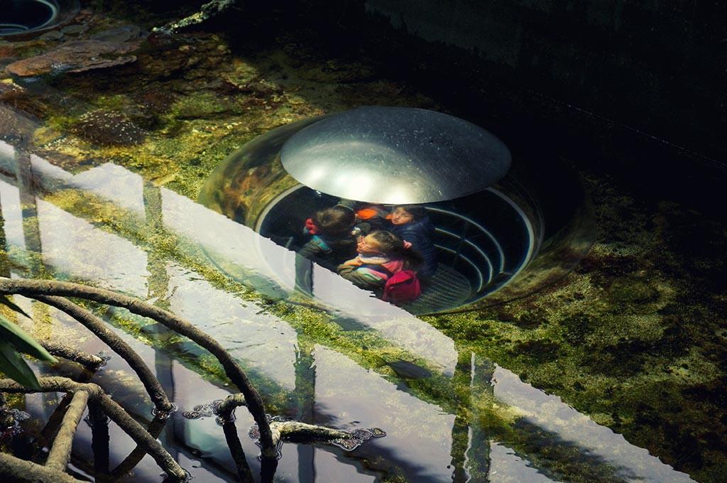 boulogne-sur-mer-nausicaa-bulle-observation