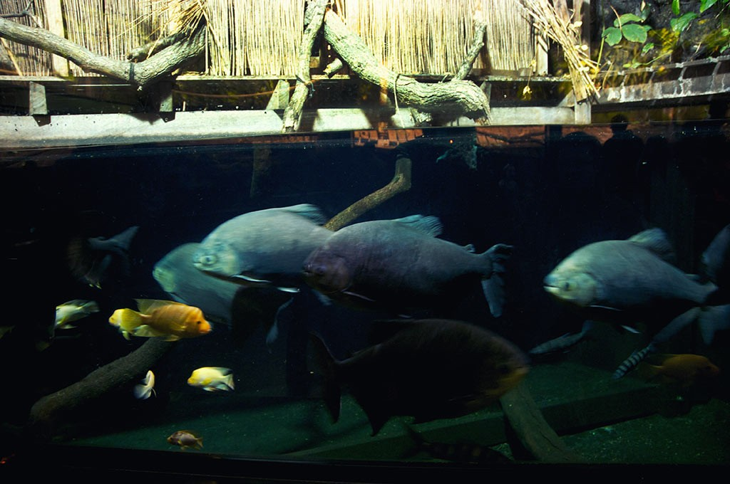 boulogne-sur-mer-nausicaa-poissons-tropicaux