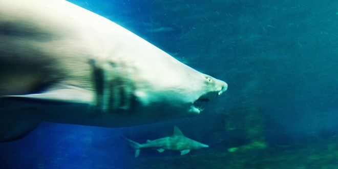 Nausicaa Boulogne-sur-Mer Requin