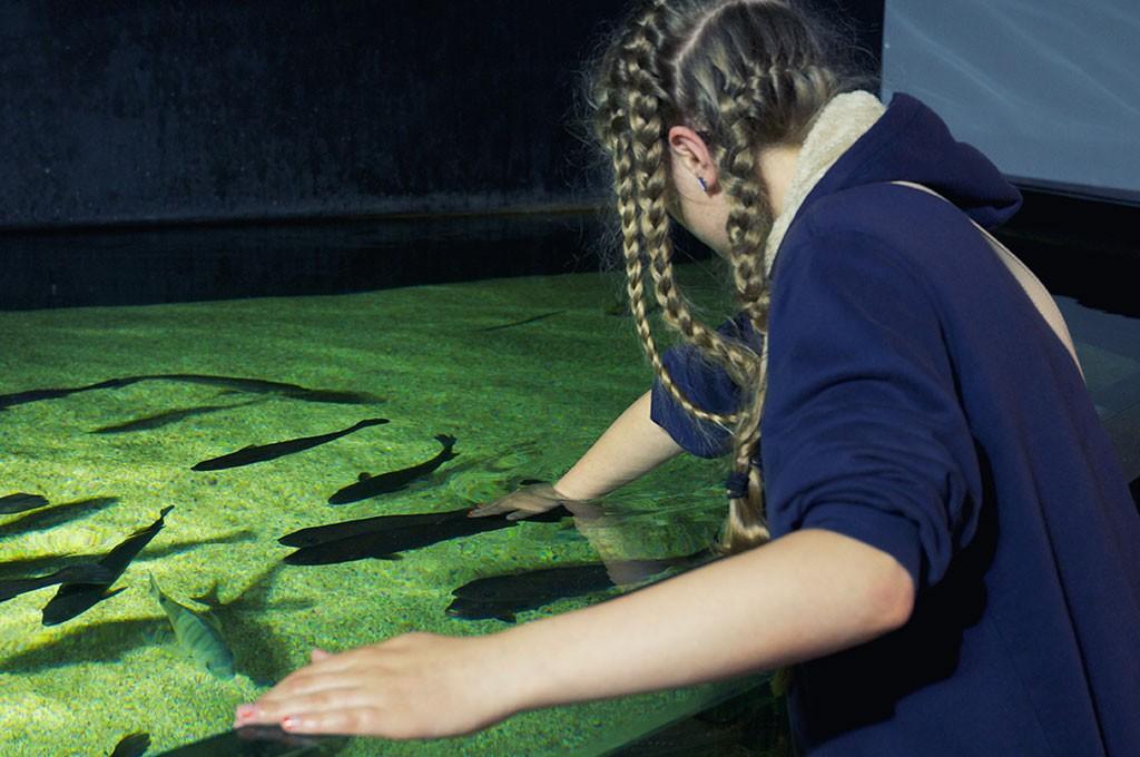 boulogne-sur-mer-nausicaa-toucher-poissons