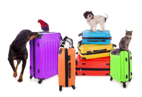valises-animaux-chien-chat-perroquet-lapin
