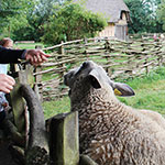 musee-plein-air-lille-moutons-1