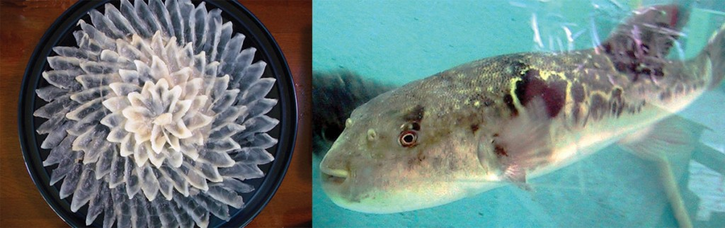 fugu poisson globe