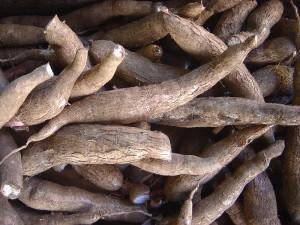 Racines de manioc